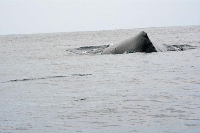 costa rica fishing and whale watching in samara beach