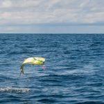 mahi mahi fishing in costa rica