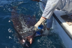 Offshore fishing charter Costa Rica