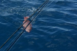 red snapper fishing costa rica