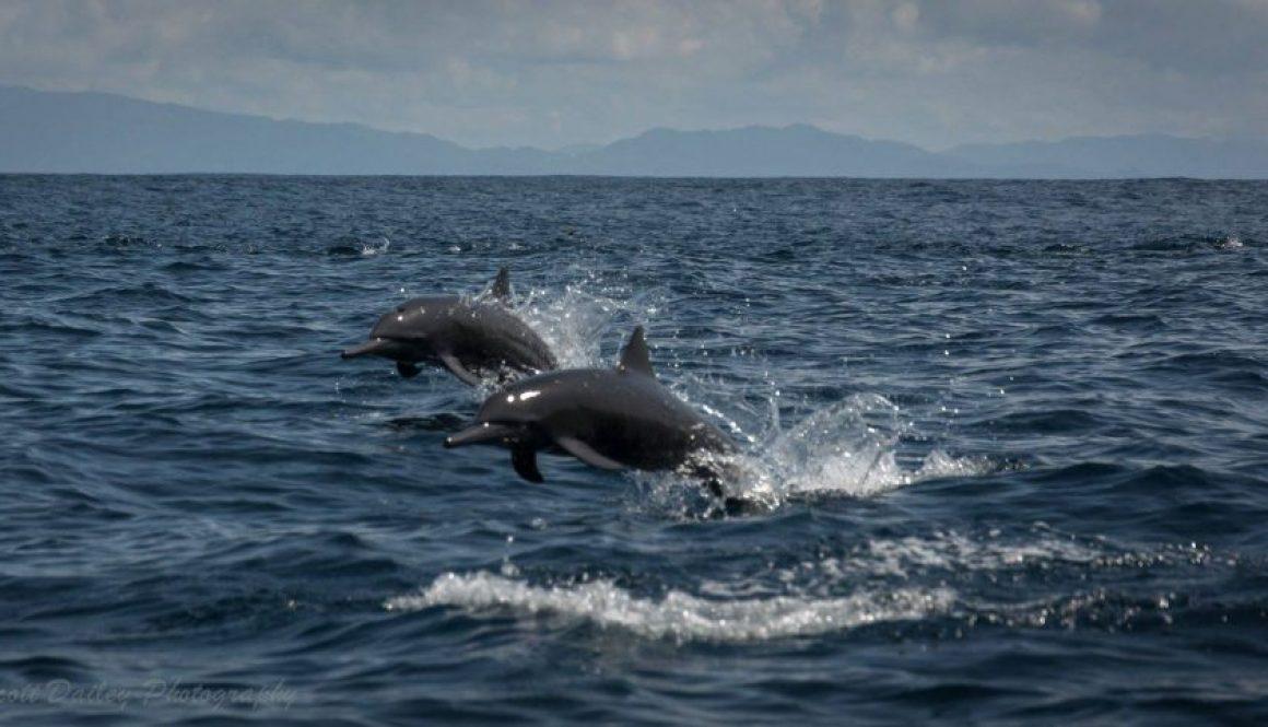 fishing and dolphin watching samara