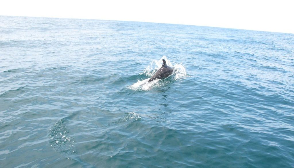 Dolphins in April – Fishing & Wildlife
